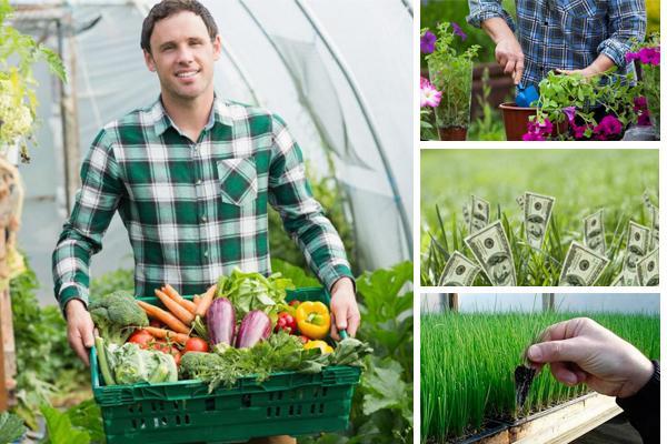 Достаточно выгодными в сельскохозяйственной сфере являются бизнес идеи по выращиванию на продажу