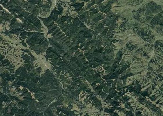 Вырубки лесов в Карпатах