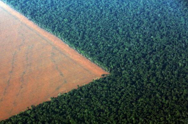 Участки леса для вырубки