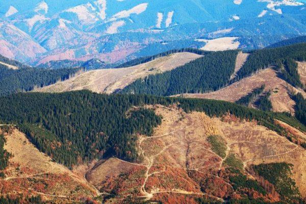 Причины вырубки лесов