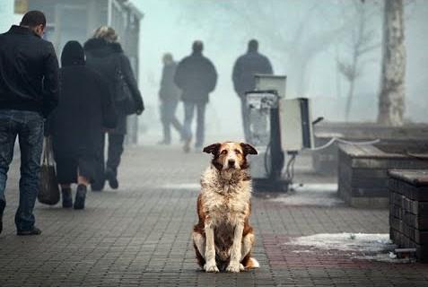 Проблемы бездомности животных
