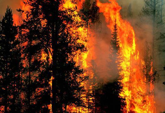 Статистика лесных пожаров в бывших странах СНГ