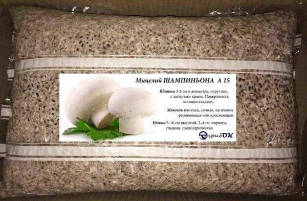 бизнес по выращиванию грибов: мицелий