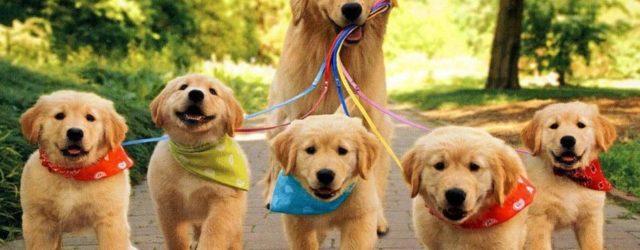 Разведение собак - непростое дело