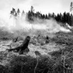 Статистика лесных пожаров