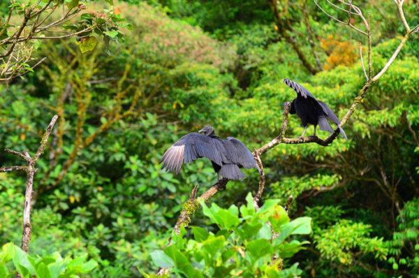Леса Коста-Рики