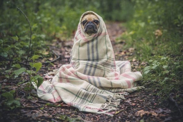 требования к открытию ветеринарной клиники