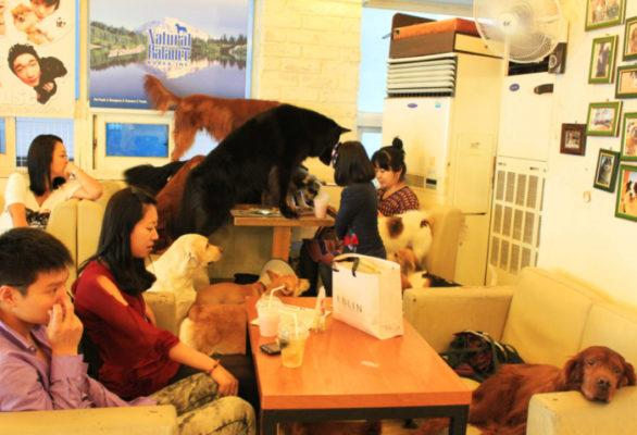 Bau House Dog Cafe