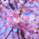 Исторические достопримечательности Японии
