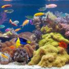Бизнес по изготовлению аквариумов на заказ