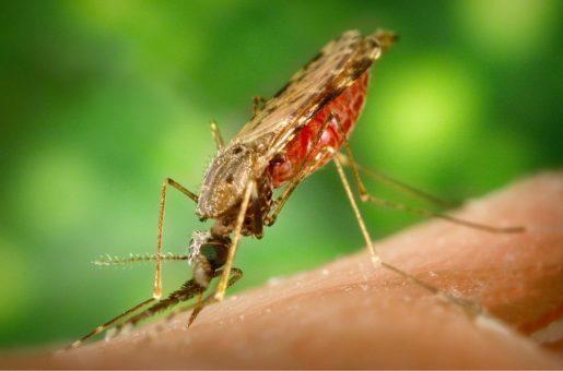 Статистика малярии