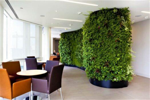 Вертикальное озеленение как бизнес