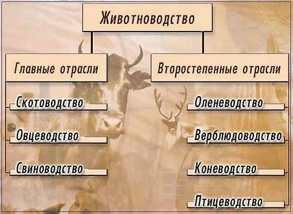 Отрасли животноводства