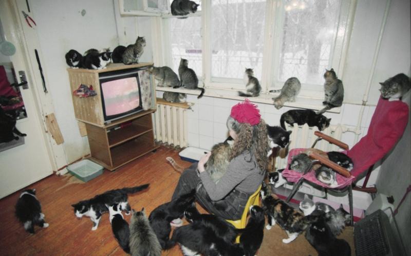 Кошкин дом: что делать, если квартира соседей стала приютом для животных