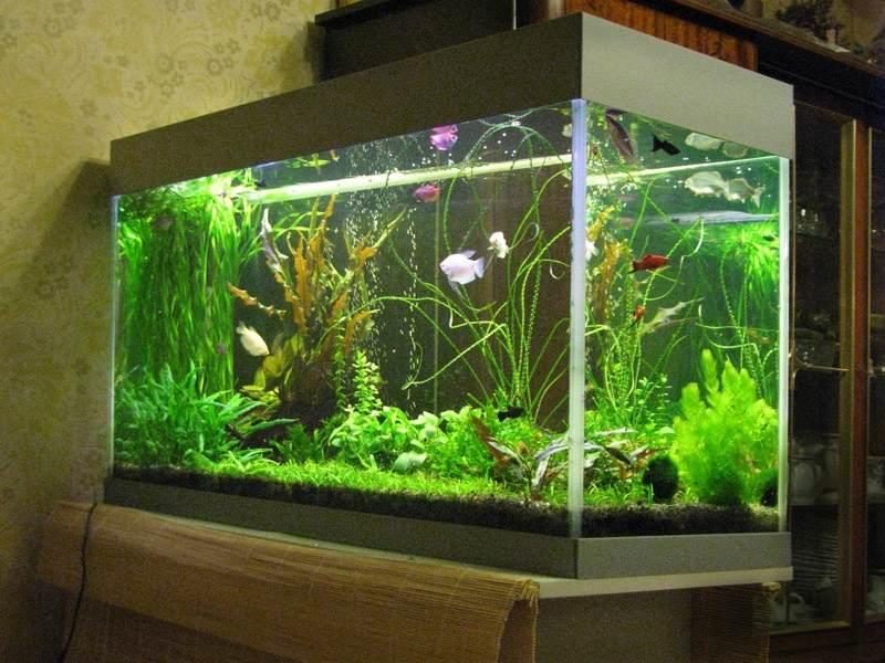 Уход за рыбками в аквариуме для начинающих